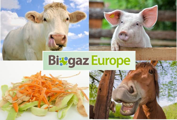 Community managment Biogaz Europe